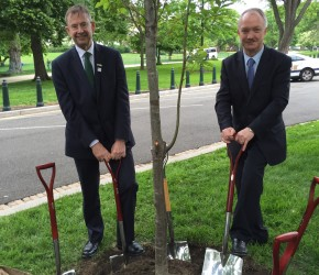 Planting a tree in Washington DC with Éamon Ó Cuív TD to commemorate the 1916 Rising